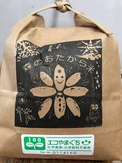 [№5226-0420]森のおたから米『朝日』 玄米 10kg