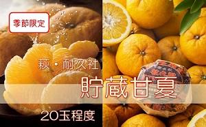 [№5226-0397]萩耐久社 貯蔵 甘夏 約10kg