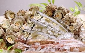[№5226-0296]鮮魚セット サザエ付き