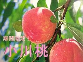 小川桃 2kg(あかつき)