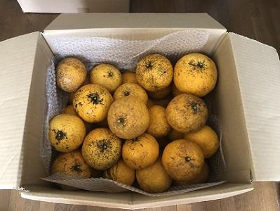 【訳アリ】萩の特産品甘夏15キロセット